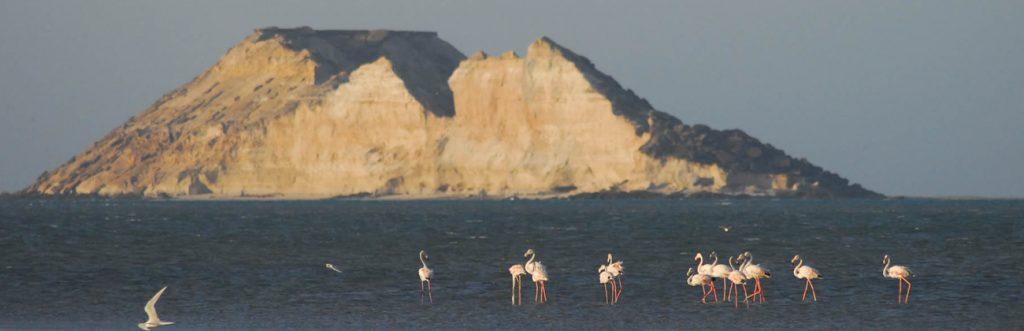 Morocco swim trek flamingos